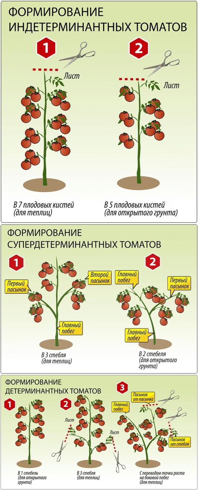 формирование куста томатов в теплице